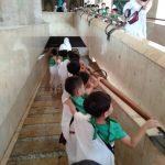 Kelompok B TK Islam PB Soedirman Mengikuti Manasik Haji Bersama 1000 Anak Lainnya